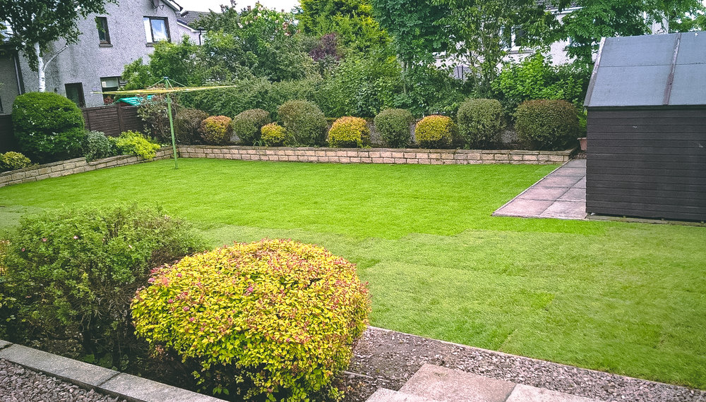 Pruning and new lawn