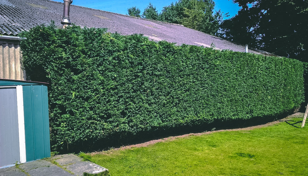 Aberdeen Hedge Trimming