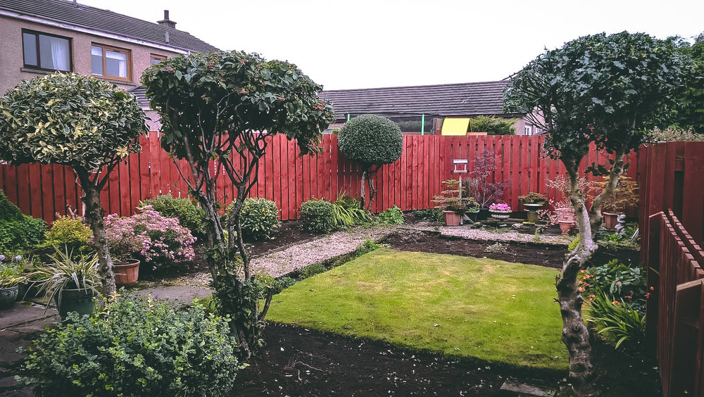 Pruning and garden tidy up
