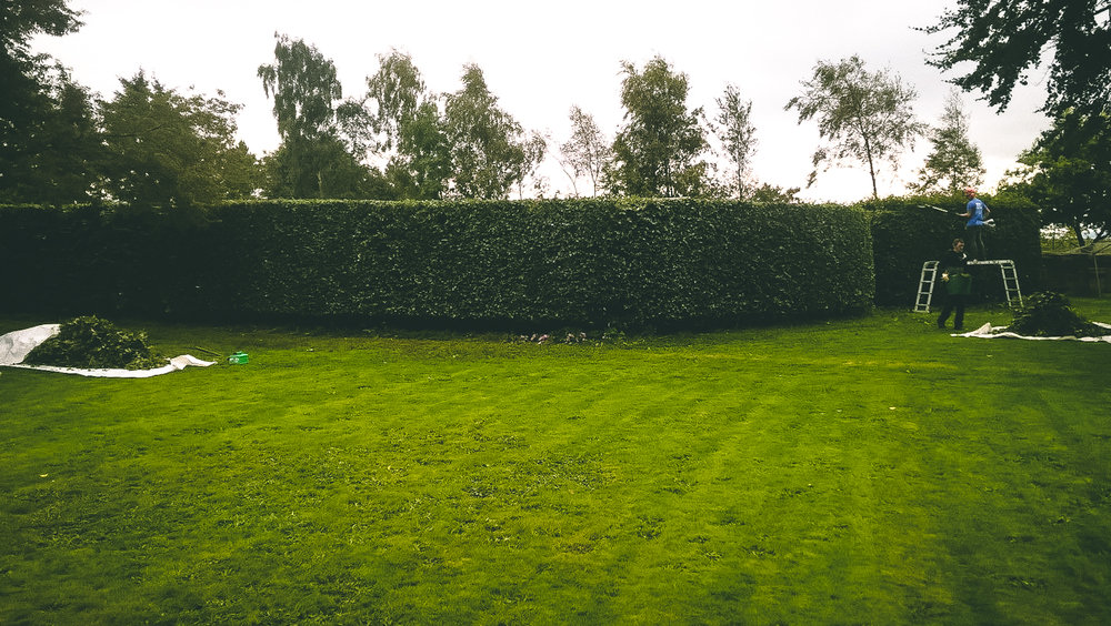 Aberdeen Hedge Trimming & Pruning