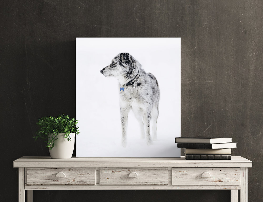 A gallery-wrapped canvas showing a spotted dog in the snow sits on top of a stylish table.