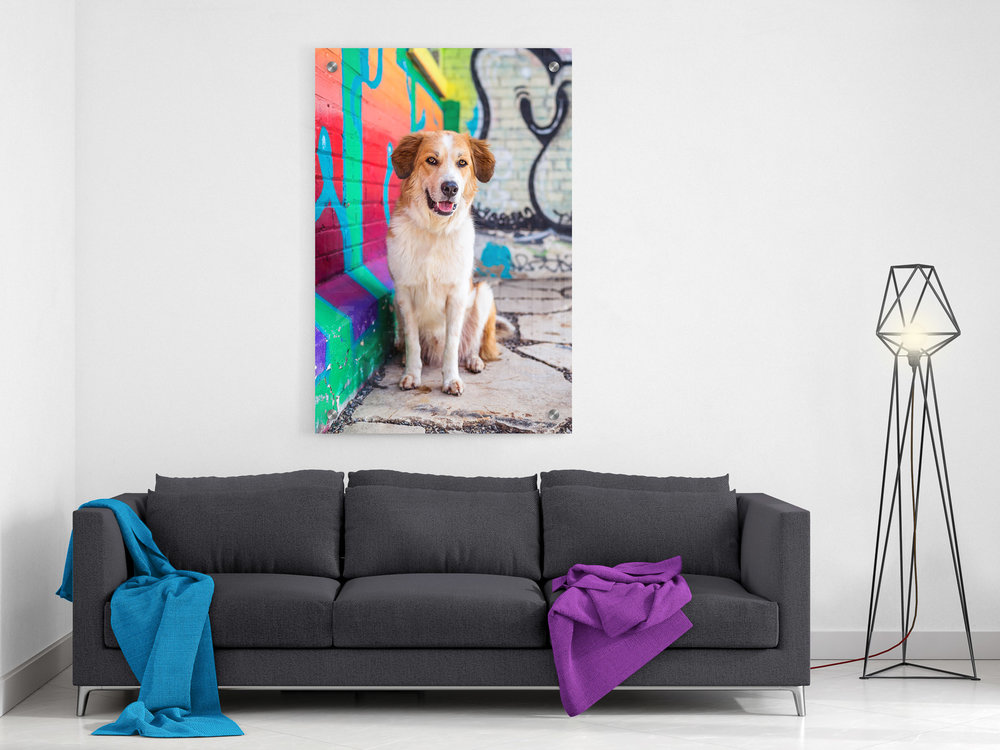 A colorful photo of a tan-and-white dog in front of a painted brick wall is hung above a modern, grey sofa in a living room.