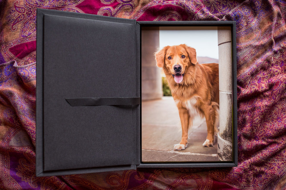A charcoal grey display box houses a photo of a smiling golden retriever mix stepping out from behind a massive limestone column.