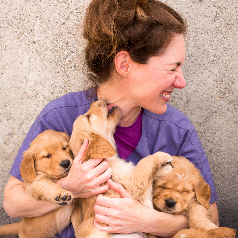 Being chewed apart by Golden Retriever puppies is surely the happiest form of torture.