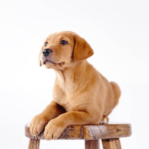 Dog Photography Sessions - Process & Pricing | Missoula Pet