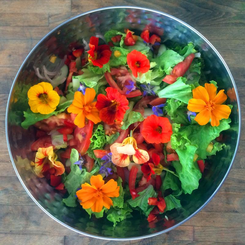 nutrition, herbs, wholefoods, vegetarian, vegan, yoga retreats, retreat in nature, nourish, nourish  in nature, yoga, yoga holidays, yoga in the sun, yoga holidays in the sun, nasturtiums, from the garden, organic