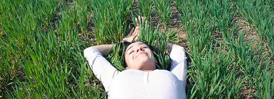grass+green+sun.jpg