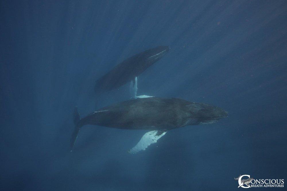 mom-baby-whale-trip.jpg