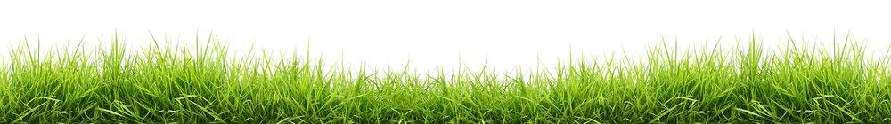 grass-bottom.jpg