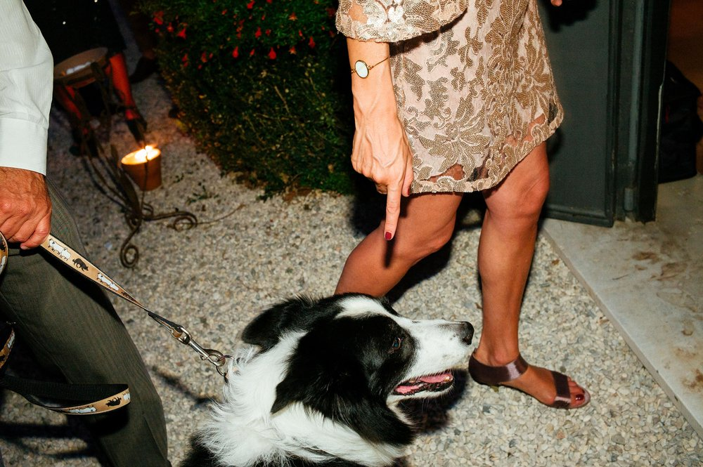 dog-sitter-at-wedding-in-italy.jpg