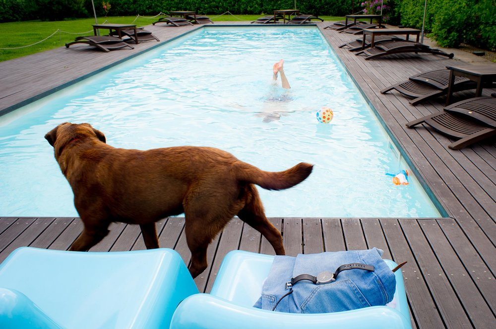 dog-watches-groom-in-the-pool-before-wedding.jpg