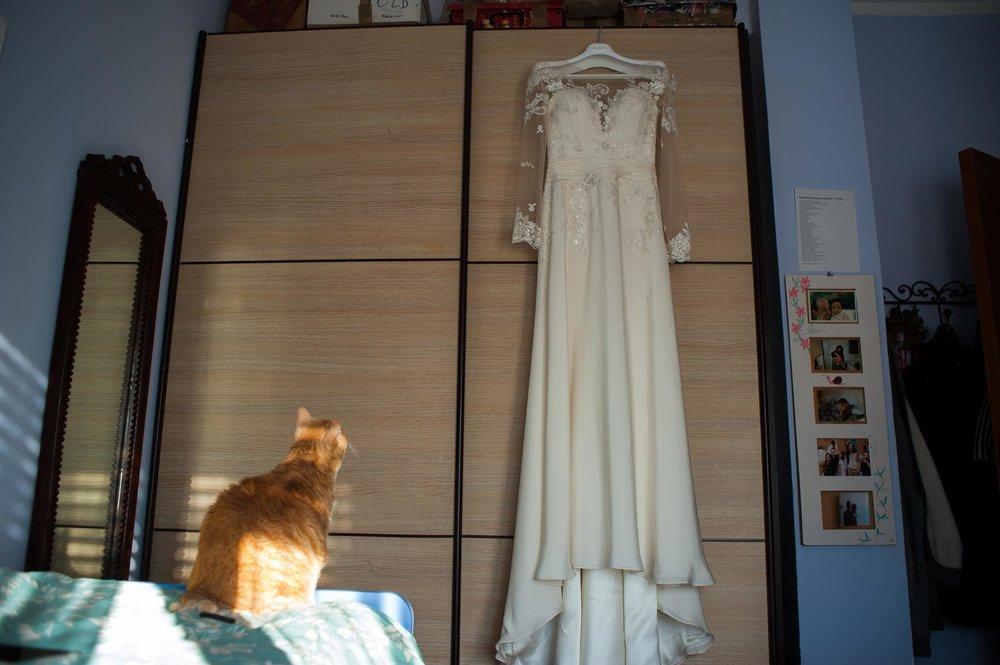 red-cat-admiring-brides-wedding-dress.jpg