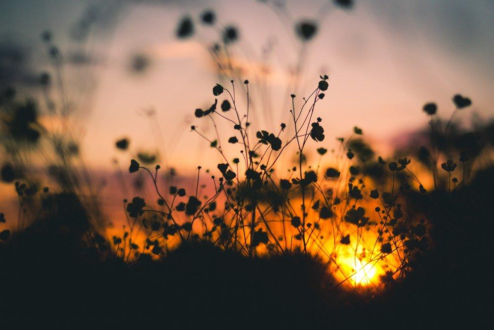 dusk-evening-flowers-7314.jpg