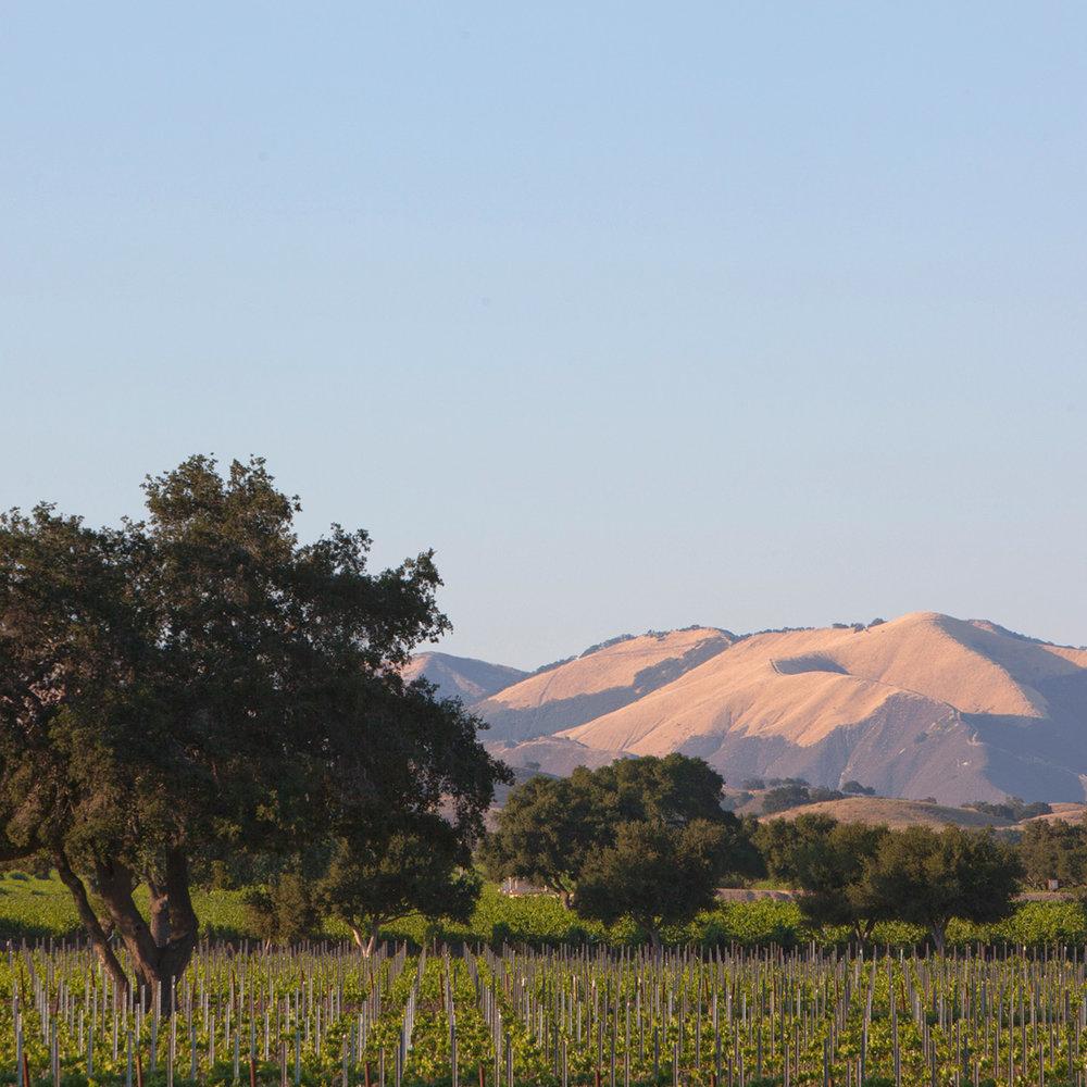 Firestone Vineyard -