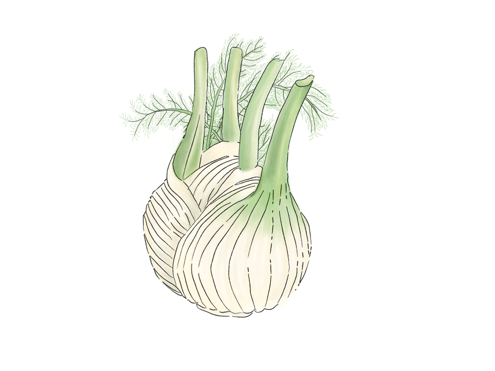 fennel in progress-01.png