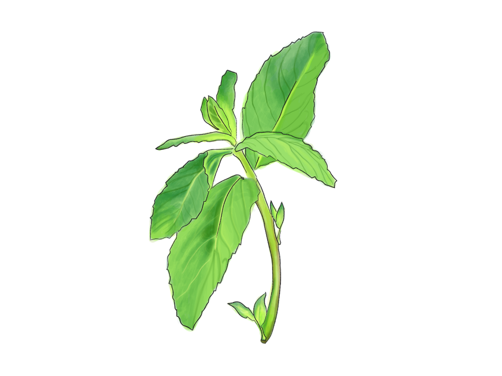 mint in progress-01.png