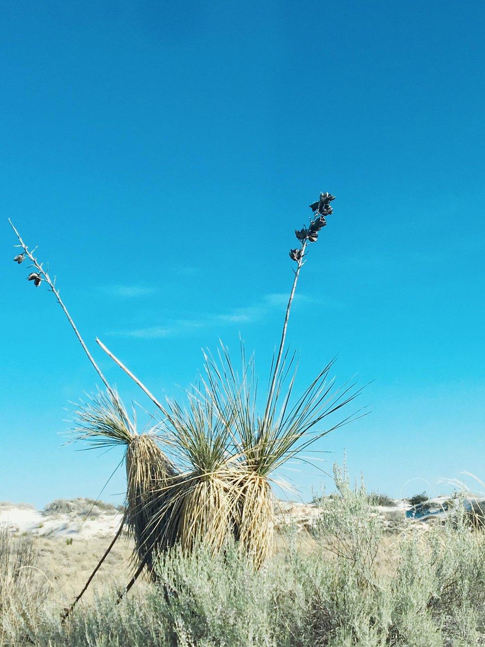 The Worlds Largest Gypsum Sandbox | Vegitation | jumpseatjenny | New Mexico