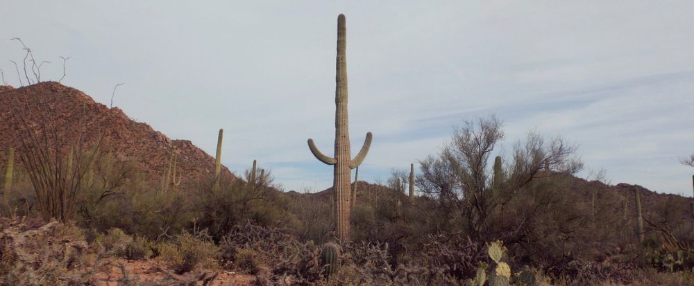 America The Great - Great Desert, Great Shopping, Great Road-Tripping Country