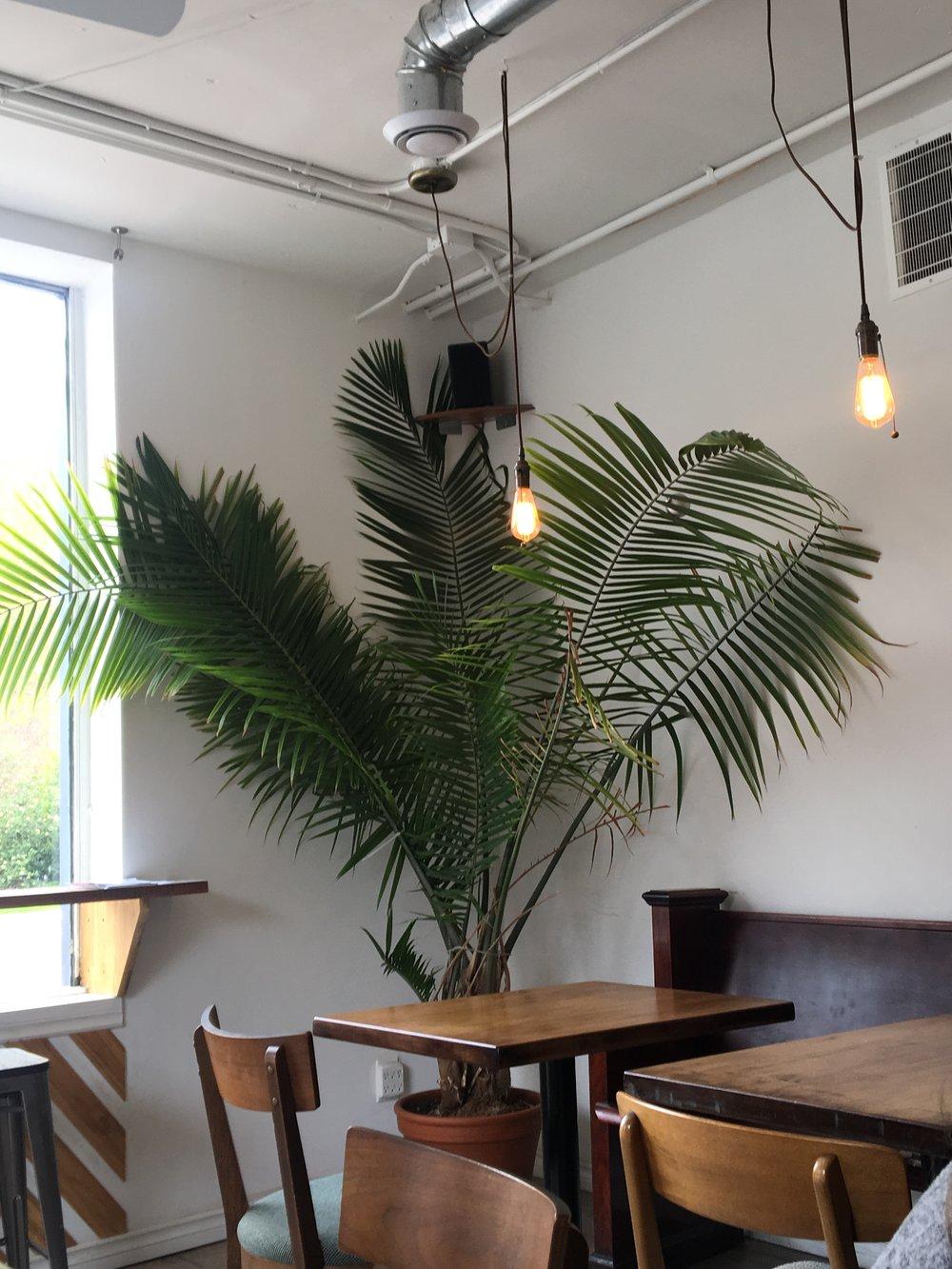 Durand Coffee | Greenery | jumpseatjenny | Hamilton Ontario.jpg