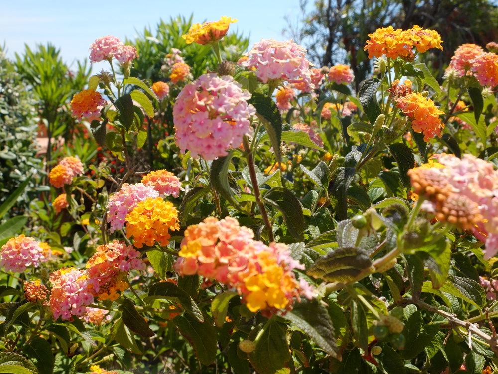 Vamos a Lagos | Algrave Florals | jumpseatjenny | Lagos Portugal