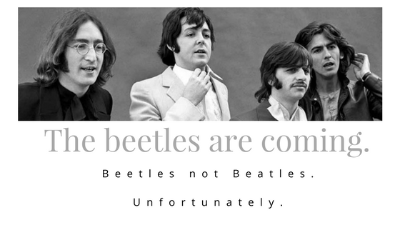 The beetles are coming. (2).png