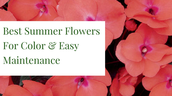 Best Summer Flowers