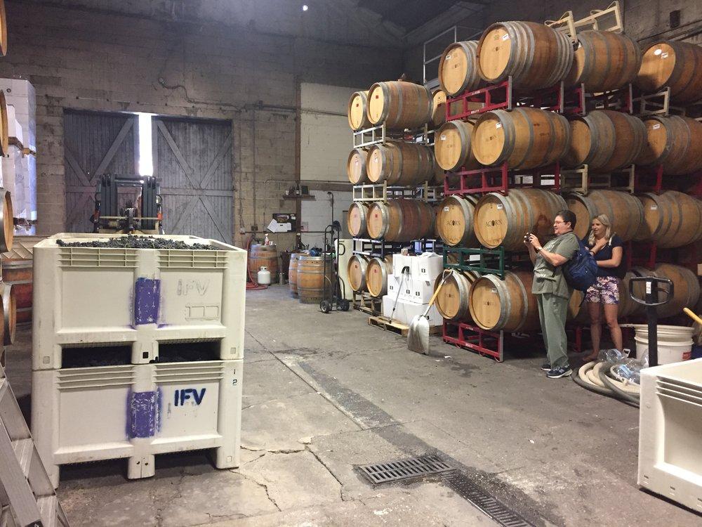 2017 Pinot Noir harvest day