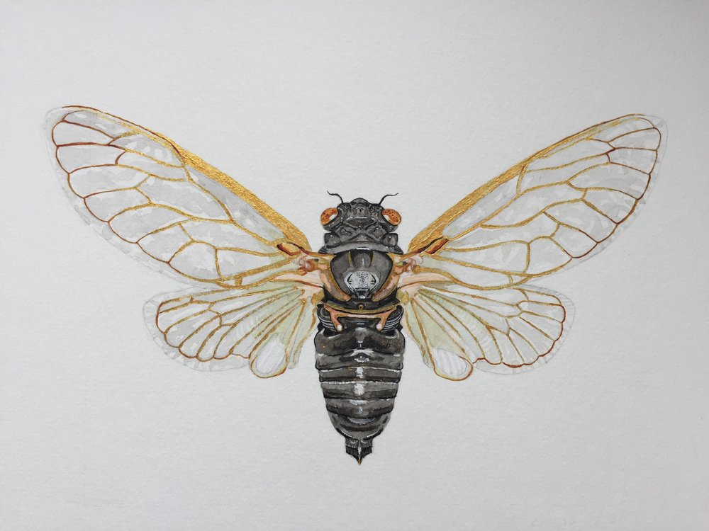 cicada - mixed media on watercolour paper