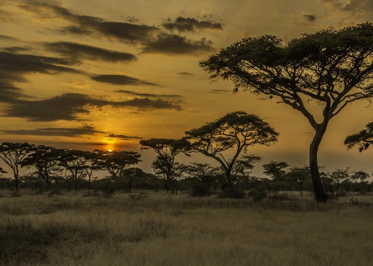 © Stefan Cardell, Solnedgång i safaritältet