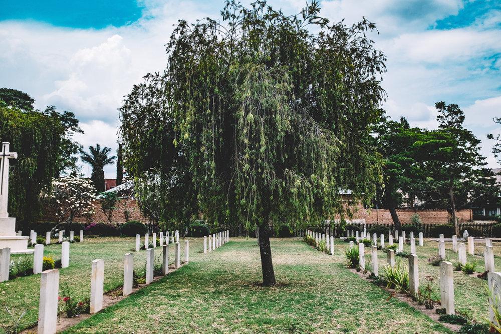 tree-plant-flower-botany-cemetery-garden-1394483-pxhere.com.jpg
