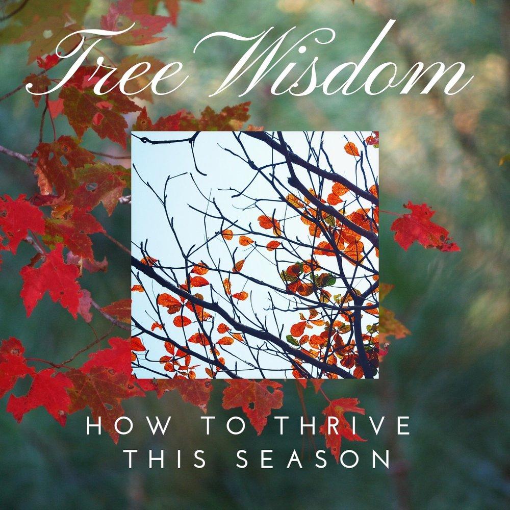 Tree+Wisdom.jpg