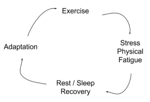 Exercise — Recovery Cycle