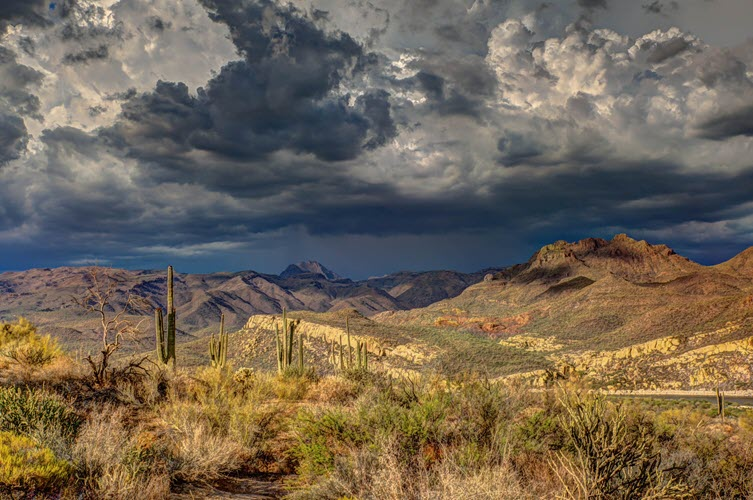 Sonoran Desert, Arizona. Photo by Robert Murray.