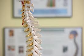 Chiropractor - Vendors Apply Here