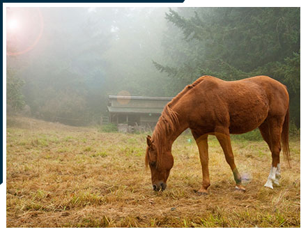 Horse Scene on Lummi Island. | Bed and Breakfast on Lummi Island, Washington