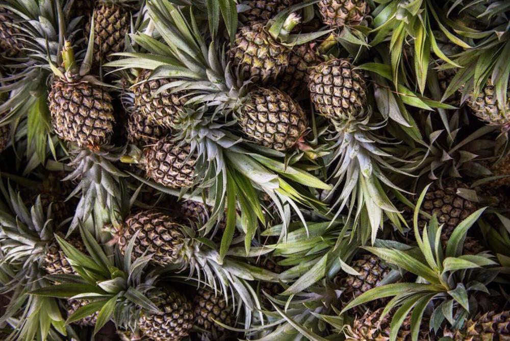 Pineapples Pinatex Instagram.png