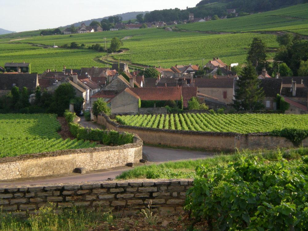 burgundy - Rodolphe demougeot