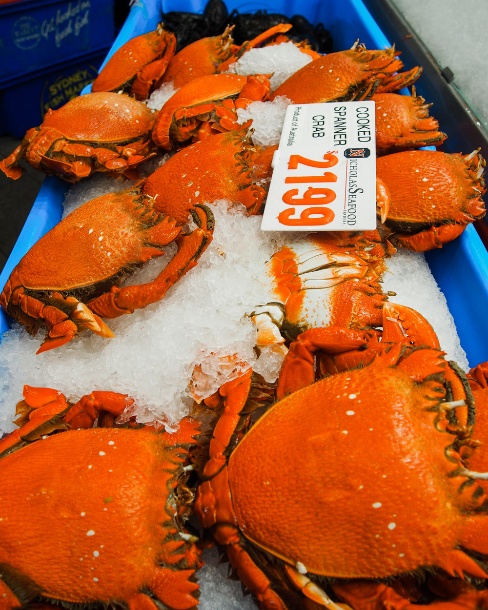 Spanner crab at the Sydney Fish Market