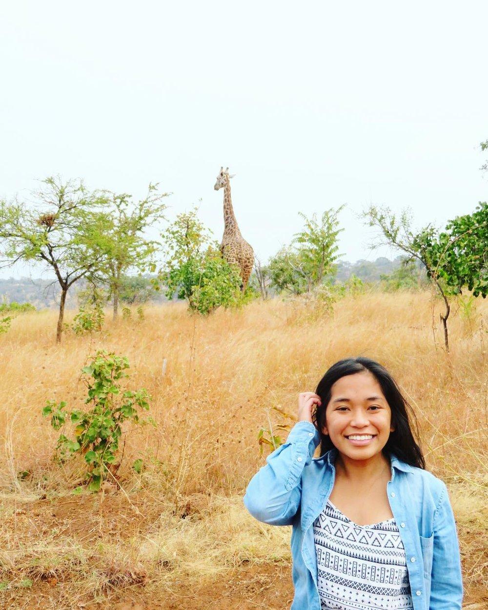 A giraffe close by at Akagera National Park in Kigali, Rwanda.