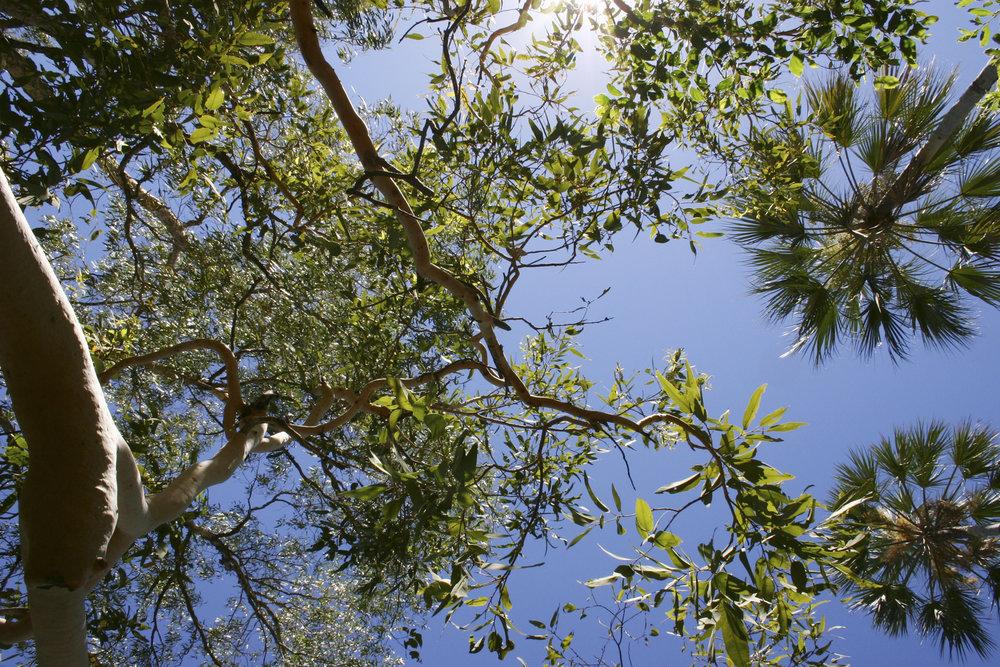 looking up.jpg