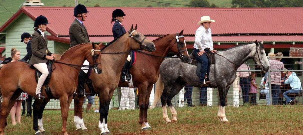 Dorrigo Show Horses 2.JPG