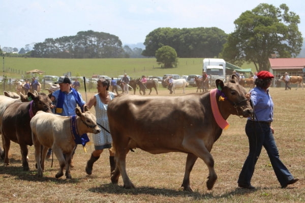 Friday Afternoon - The Show kicks off at 1pm with the Junior Beef sections. In 2016, the Show highlighted the Beef Industry, and the competition attracted farmers from across the region. Even more entries are likely in 2018. Be sure also to see the Dairy and Commercial Beef sections on Saturday and Sunday. The Dorrigo Plateau has long been famous for its dairies, so it's no wonder the Jersey and Holstein Friesian exhibits are always stunning.