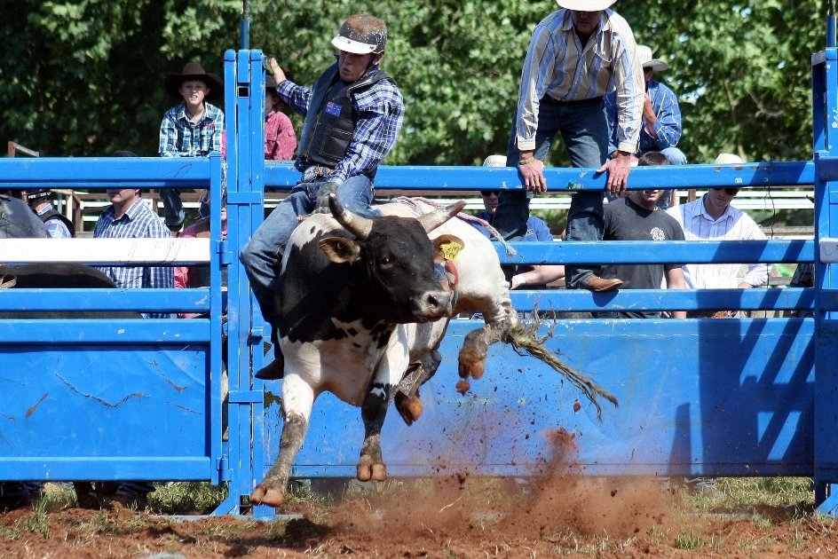 """Friday Evening - Don't miss the thrills, spills, and bucking bulls at the rodeo. Competitors will face up to 30 bulls from Matthew Doak Bucking Bulls, Bundarra. These will include 10 to 15 """"mini"""" bulls for the under-16 years events, specially bred to meet the height limitations required for junior riders. Rodeo classes will include Open and Novice bull rides, 14-to-under-18 steer ride, 8-to-under-11 poddy ride, 8-to-under-11 mini bull ride, and 11-to-under-14 mini bull ride. Tickets for the Rodeo are $10; free for Show Society members. The action starts at 7pm.Rodeo competitors: There are some generous cash prizes to be won! Follow this link for registration and fees."""