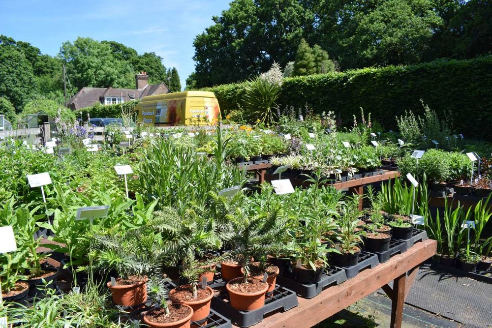 Visit the nursery - We don't advertise any fixed opening hours, but we do have a small but perfectly formed sales and display area with lots of lovely plants on show. We live on site, but to avoid disappointment it is best if you give us a call or drop us an e-mail just to be sure we are around when you intend to come. You will be very welcome. Full directions here.