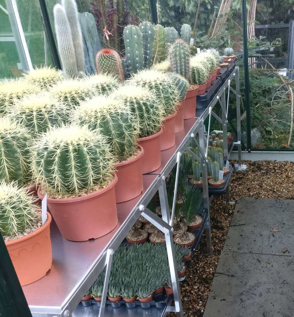 Cacti in one of the PP greenhouses October 2018