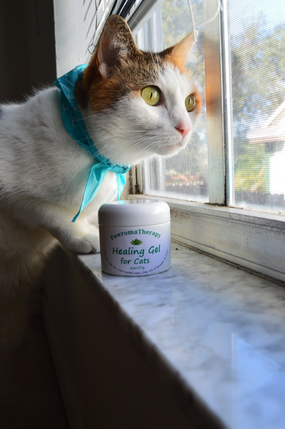 Cat with Healing Gel.JPG