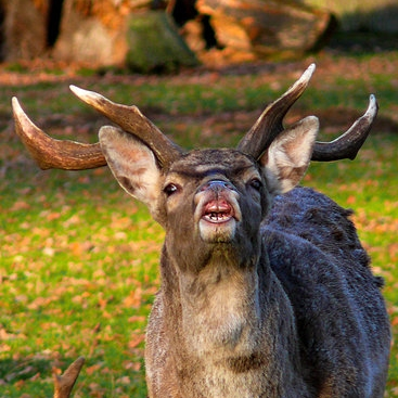 funny_deer_by_thefunnyspider-d7ao98p.jpg