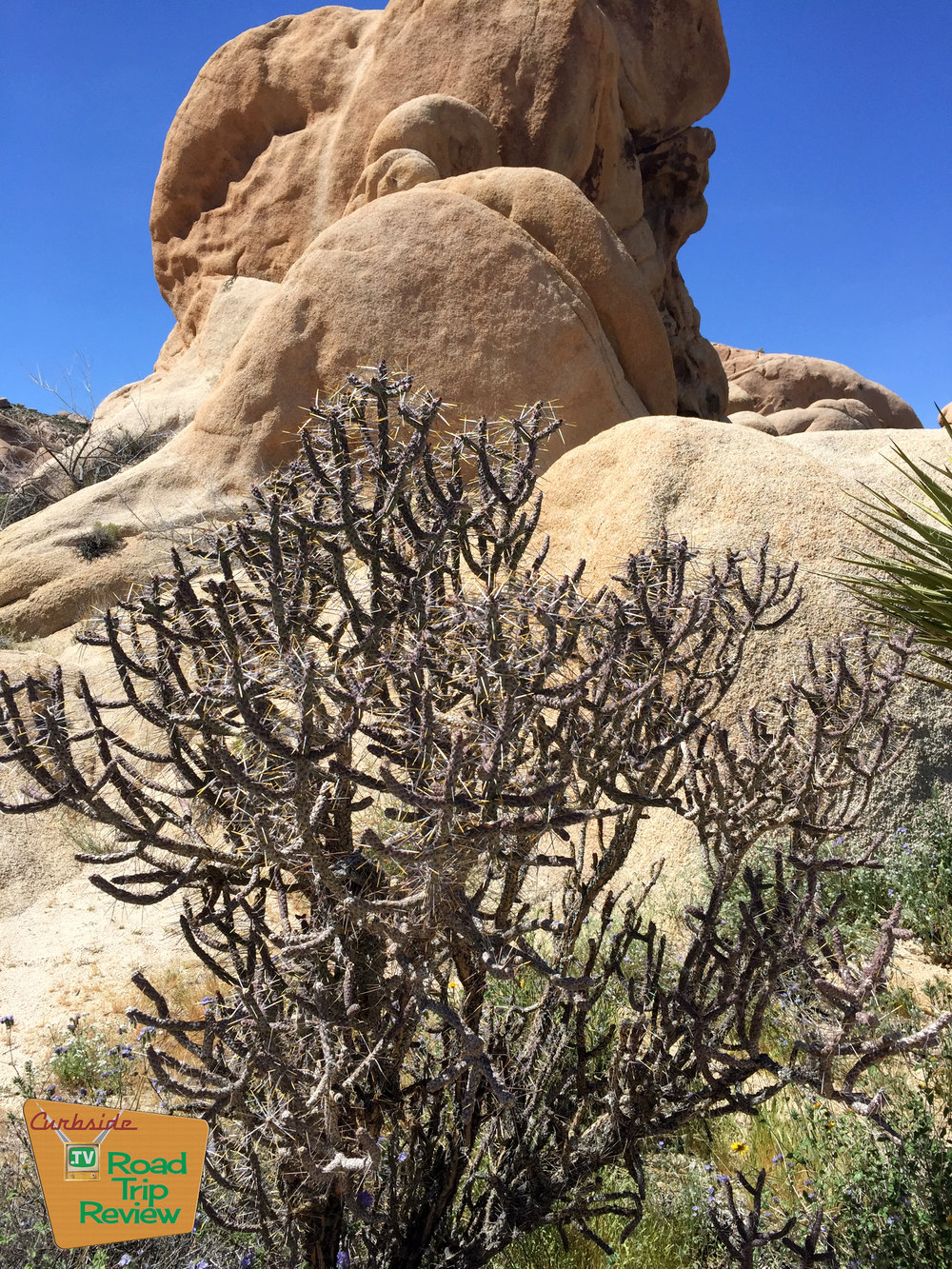 Joshua Tree National Park - 167.jpg