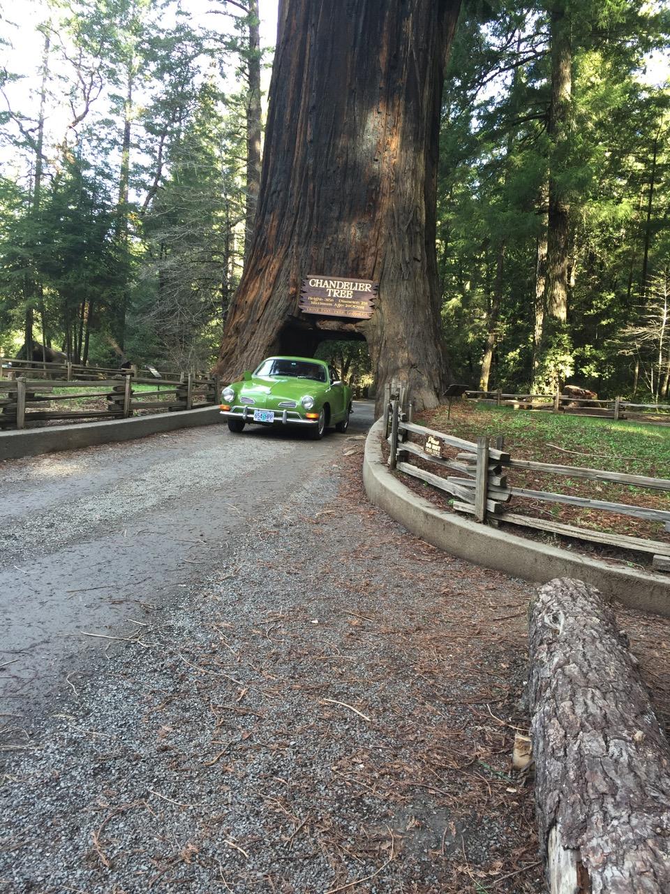 Drive Through tree - 5.jpg