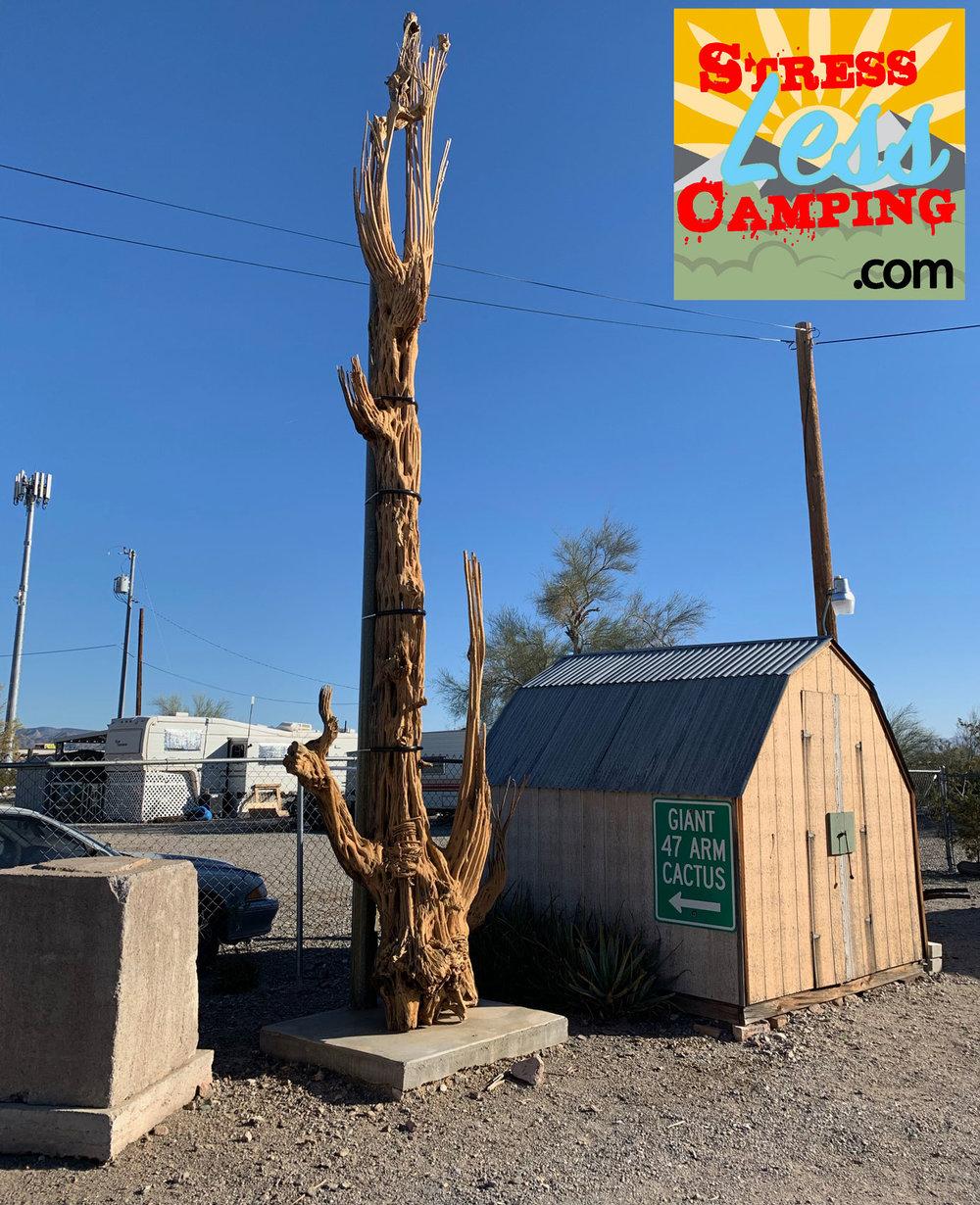 47-arm-cactus.jpg